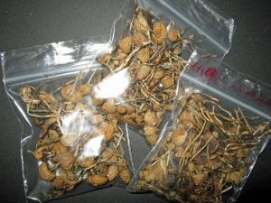 Buy Magic Mushrooms Online| Shrooms for Sale